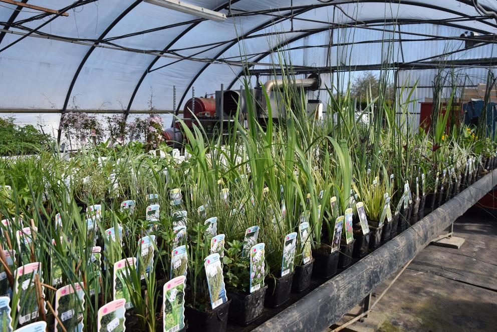 plante aquatique magasin