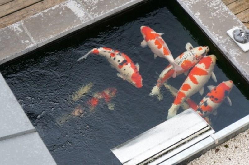 Présentations Des Bassins Pour Concours